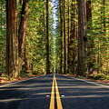 Avenue Of The Giants by James Eddy