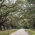 Avenue Of The Oaks by Roger Potts