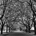 Avenue Of Trees Monochrome by Jeff Townsend