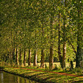 Avenue Of Trees On The Kennet And Avon Canal by Louise Heusinkveld