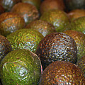 Avocados by Robert Meyers-Lussier