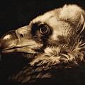 Avvoltoio by Ilaria Andreucci