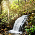 Awakening In The Forest by Debra and Dave Vanderlaan