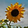 2001 - Awakening Sunflower by Sheryl L Sutter