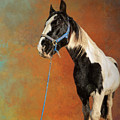 Awesome Gypsy Horse by Elisabeth Lucas