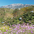 Axarquia In Spring by Rod Jones