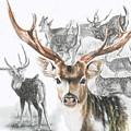 Axis Deer by Barbara Keith