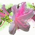 Azalea #2 by Gina Harrison