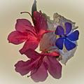 Azalea Bouquet Majic by Douglas Barnett