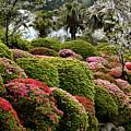 Azalea Bush Garden by Joe Bonita