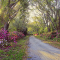 Azalea Lane By H H Photography Of Florida by HH Photography of Florida