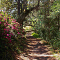 Azalea Path  by Bob Johnson