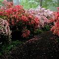 Azalea Pathway by Deborah  Crew-Johnson