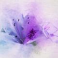 Azalea Splash 2 by Terry Davis