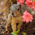 Azalea Squirrel by Stacie Paris