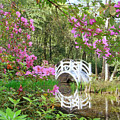 Azaleas And Bridge In Magnolia Lagoon by Larry Mccrea