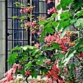 Azaleas At The Window   by Sarah Loft
