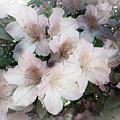 Azaleas by Irene Dowdy