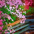 Azaleas Over The Fence by Donna Bentley