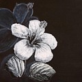 B And W Hibiscus by Richard Le Page