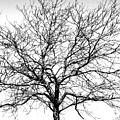 B/w Tree #1 by Cat McBrien