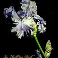 Babbling Brook Iris  by John Trax