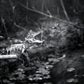Baby Alligator Vs Mud Wasp by Mark Andrew Thomas