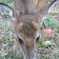 Baby Backyard Button Buck by Anne Ditmars