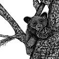 Baby Bear by Jennifer Campbell Brewer