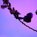 Baby Bird Silhouette by Nick Gustafson