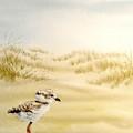Baby Bird by Sonya Catania