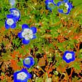 Baby Blue Eyes 3 by Scott L Holtslander