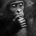 Baby Bonobo by Heiko Koehrer-Wagner