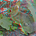 Baby Bunny - Use Red-cyan 3d Glasses by Brian Wallace