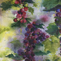 Baby Cabernet I  Triptych  by Maria Hunt