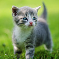 Baby Cat by Tapu Vlad