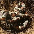 Baby Corn Snake by Frank Guemmer