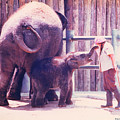 Baby Elephant At Zoo 1988 by Fred Jinkins