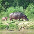Baby Hippo 1 by Ibolya Taligas