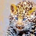 Baby Leopard by David Millenheft