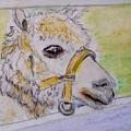 Baby Llama by Lessandra Grimley