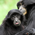Baby Monkey And Mother by Pierre Leclerc Photography