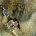 Baby Monkey by Rick  Monyahan