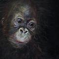 Baby Orangutan Three by Odile Kidd