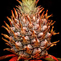 Baby Pineapple by Heather Applegate