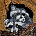 Baby Raccoons by Dia Spriggs