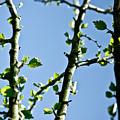 Baby Spring Tree Leaves 01 by Ryan Kelly