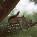 Baby Squirrel by Linda Kerkau