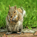 Baby Squirrel's First Peanut by Geraldine Scull
