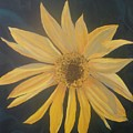 Baby Sunflower by Betty-Anne McDonald